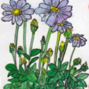 春の花 ~ブルーデージー~