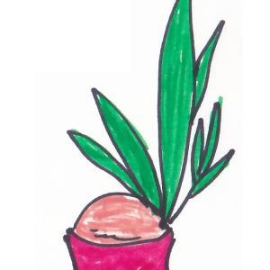 観葉植物 ~ココヤシ~