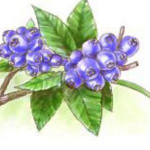 果樹 ~ブルーベリー~