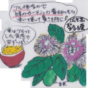 夏野菜 ~パッションフルーツ~