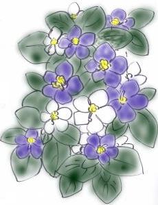 夏の花 ~エキザカム~