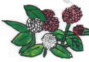 夏の花 ~センニチコウ~