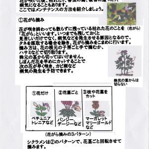 植物部門マニュアル ~メンテナンス~