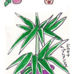~観葉植物で節電~