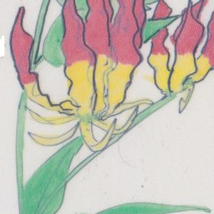 球根植物 ~グロリオサ~