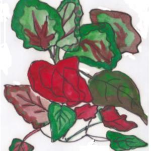 観葉植物 ~レックスベゴニア~