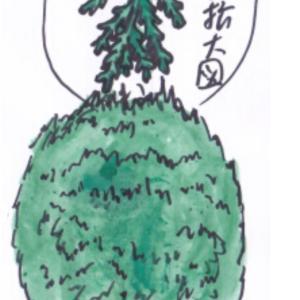 庭木 ~コノテガシワ~