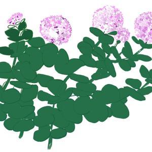 秋の花 ~ミセバヤ~