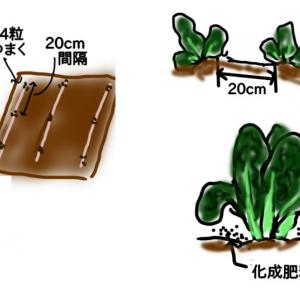 秋冬野菜 ~カツオナ~