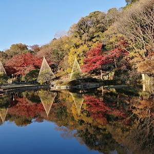 水面に映る紅葉が奇跡的な景色を生み出す「肥後細川庭園」