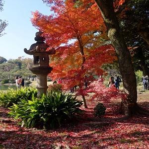 都内紅葉サイクリングで日本庭園「六義園」に行こう!