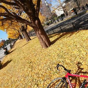 都会の紅葉を求めて「東京駅」と「皇居外苑」へサイクリング