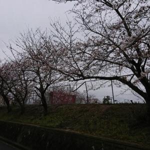 朝イチ散歩