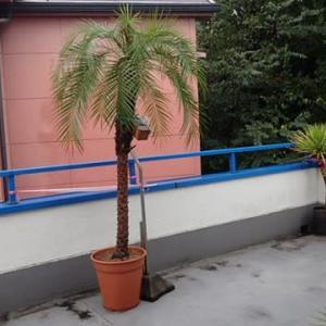 台風前のベランダの植物達の身の振り方