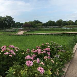 昨日の舎人公園(季節は進んで行く)