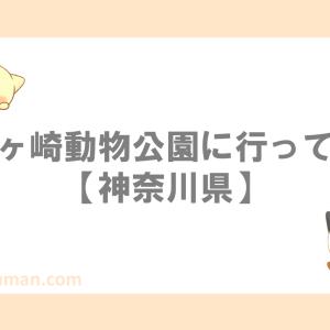 夢見ヶ崎動物公園に行ってきた【動物園/無料/虫少年との出会い】