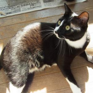 日向ぼっこをする我が家の飼い猫