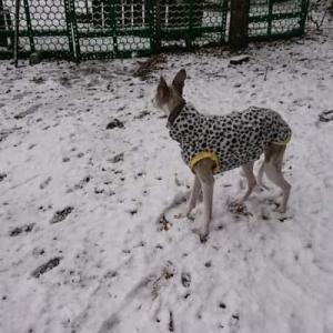 雪が降りました キレイですよ!