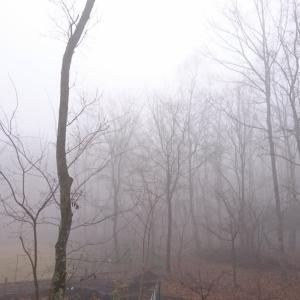 霧の日曜日の遊び