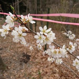 ドッグラン枝瑠風に咲く3月の花たち