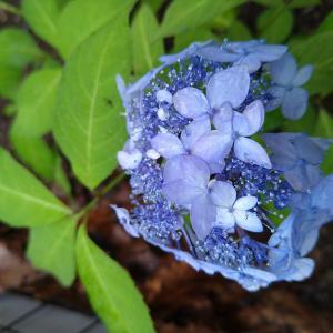 枝瑠風に咲く梅雨の花