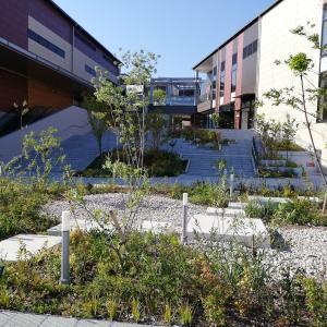 「植物園」としての南町田グランベリーパーク🌸50種以上の植物をご案内