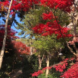 12月・・・東京の紅葉も綺麗です❕