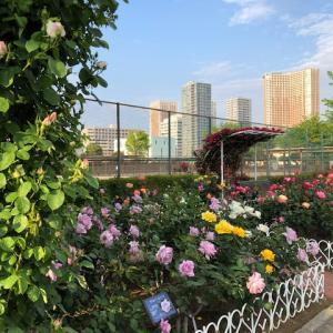 芝浦中央公園のバラは・・・