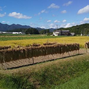 【レジャー】運動会と稲刈り体験