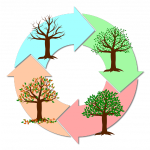 PDCAサイクルとは何か、簡単に言うと「システム改善の方法論」