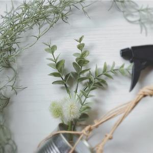 初心者や、ずぼら、めんどくさがりでも育てやすい?観葉植物おすすめまとめ