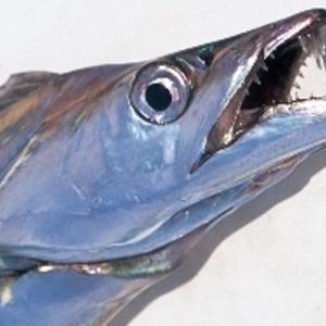南港でのタチウオ釣りで試してみたいリグ!【タチバマSS 100-5】