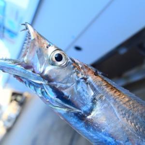 【初心者向け】大阪南港・北港でタチウオを釣る方法【仕掛け・釣り場】