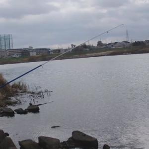 京都の桂川で鯉釣り、第一投目でまさかの!?【桂大橋】