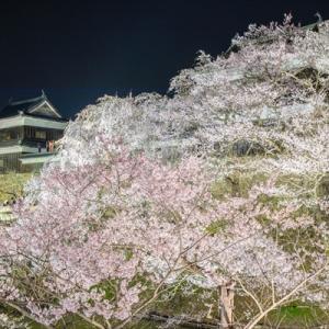 2020年春 上田城千本桜まつり【桜deフォトしませんか?】