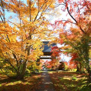 紅葉シーズンを迎えた【長野県飯山市】へ来ませんか!