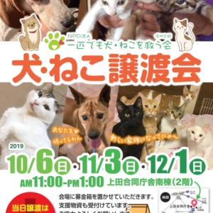 12月「犬・ねこ譲渡会」のご案内【長野県上田市】