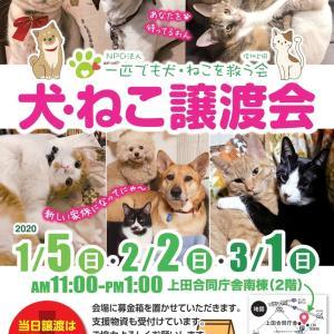 2月「犬・ねこ譲渡会」のご案内【長野県上田市】