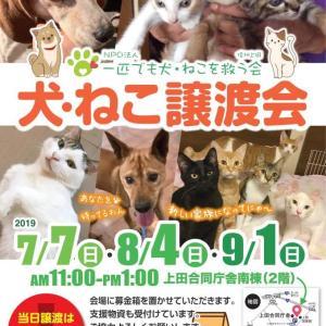 9月1日 「犬・ねこ譲渡会」です【長野県上田市】