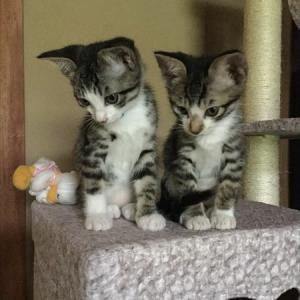 猫が大好きで心から愛しているカップルいませんか?