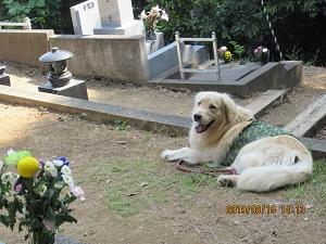 お墓参りする犬