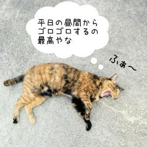 貧乏ぼっちと猫。