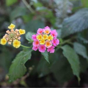これなんて植物?