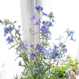 清く明らかなお花