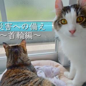災害への備え〜首輪編〜