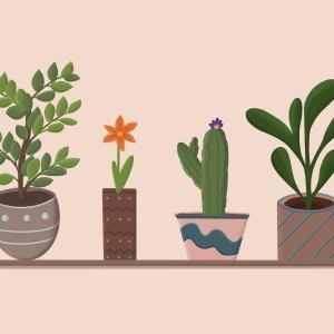 鉢植えの整理整頓