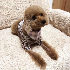 肥満細胞腫グレードⅢ『余命半年』と宣告された愛犬との日々㉝「放射線治療 中止」