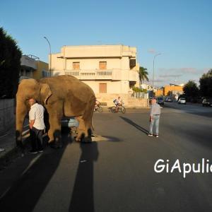 象、逃走中!