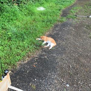 王禅寺の猫