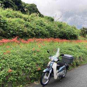 下赤坂の棚田〜阪南スカイタウン